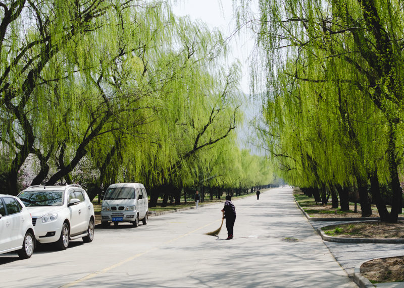 Spring Comes to Xi'an_