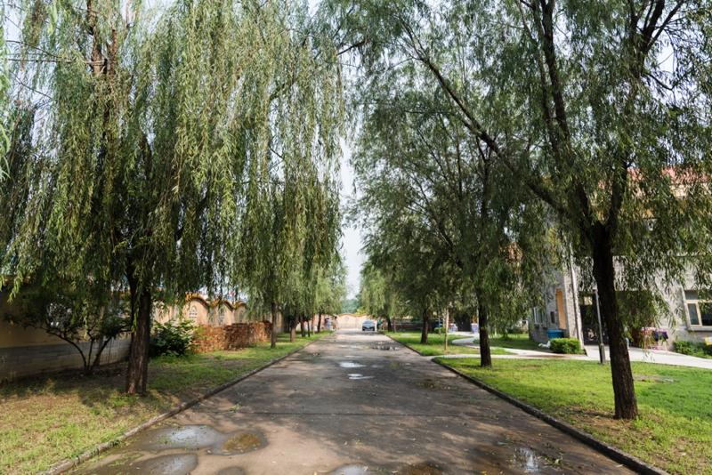 18.7.19 SVCF campus-22